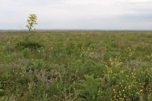 steppe-spiriticchio